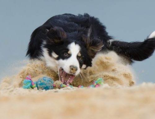 La importancia del juego en los perros