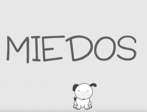 Cómo evitar que los perros sufran por miedo a otros perros
