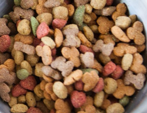 ¿Es bueno el pienso natural para los perros?