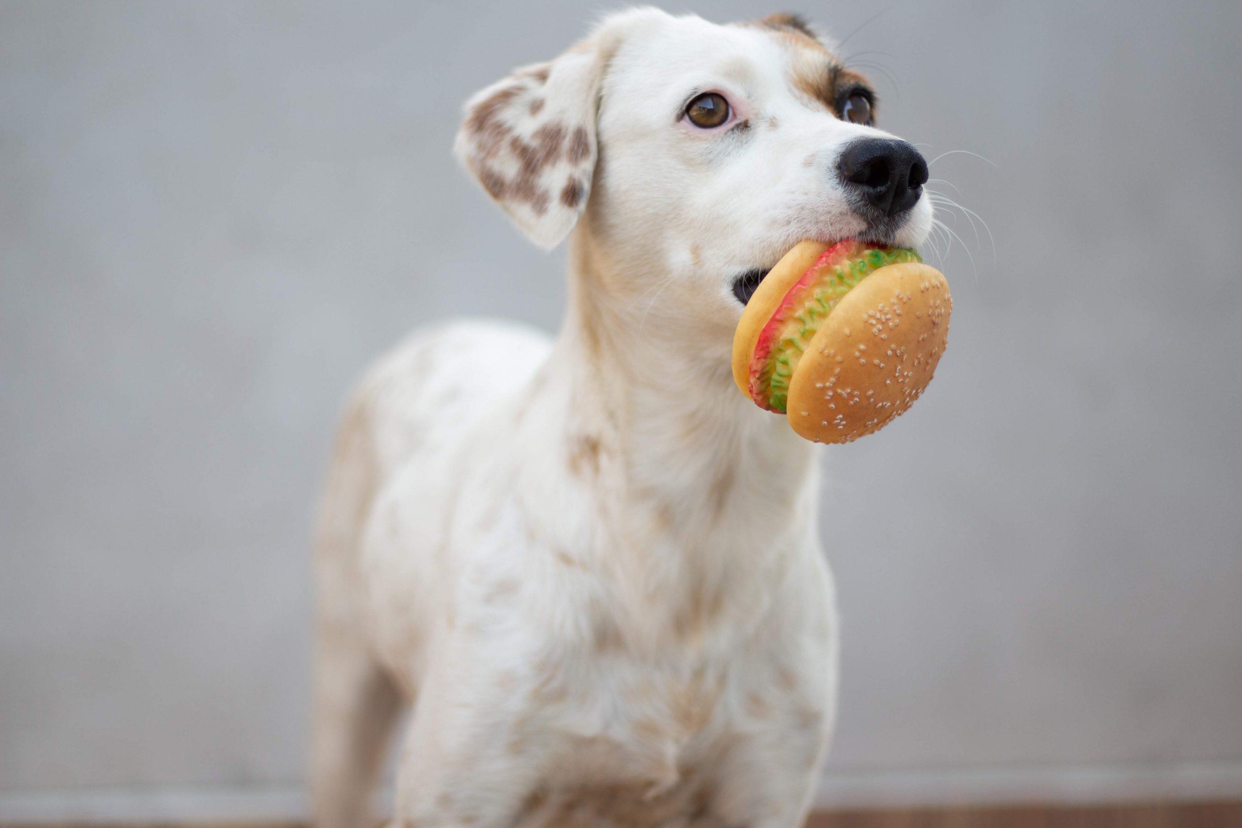 perro con hamburguesa de juguete