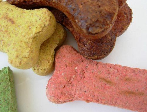 El mejor cuidado digestivo de las mascotas