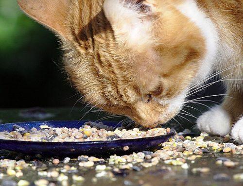 Alivia los riñones de tu perro o gato