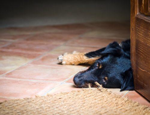 Juegos sencillos para quitar estrés a nuestros perros