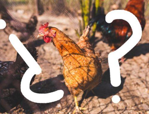 ¿Por qué dicen pollo cuando es subproducto de pollo?