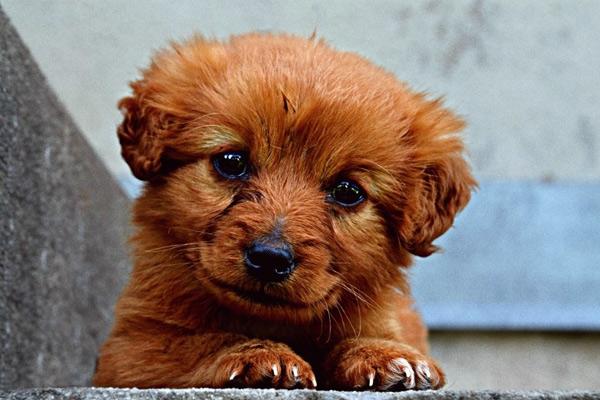 Después de adoptar un perro