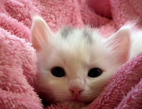 Después de adoptar un gato