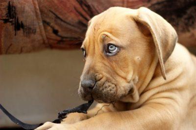 Antes de adoptar un perro