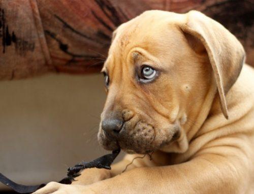 Todo lo que debes saber antes de adoptar un perro