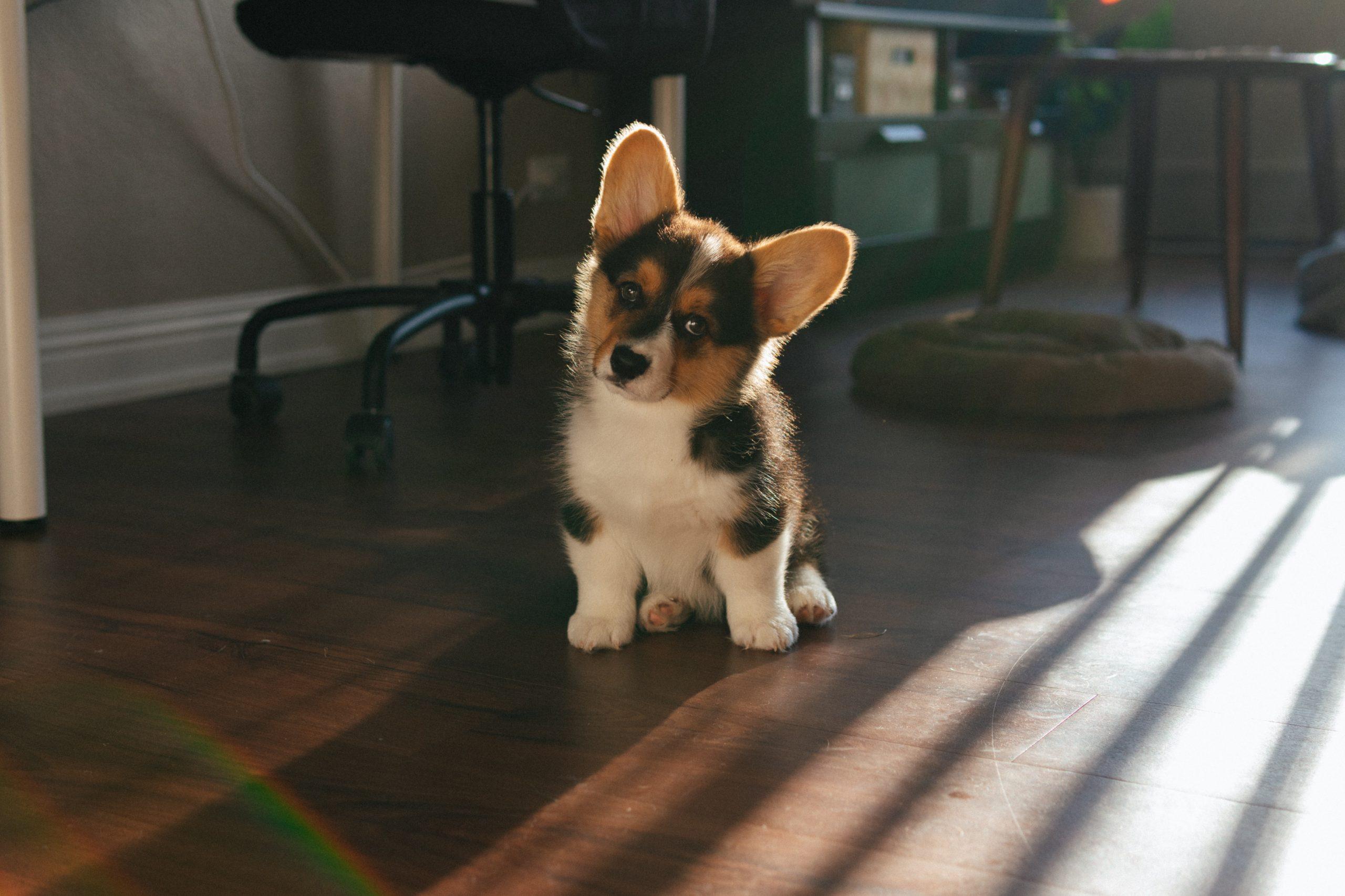 cachorro rayo de sol