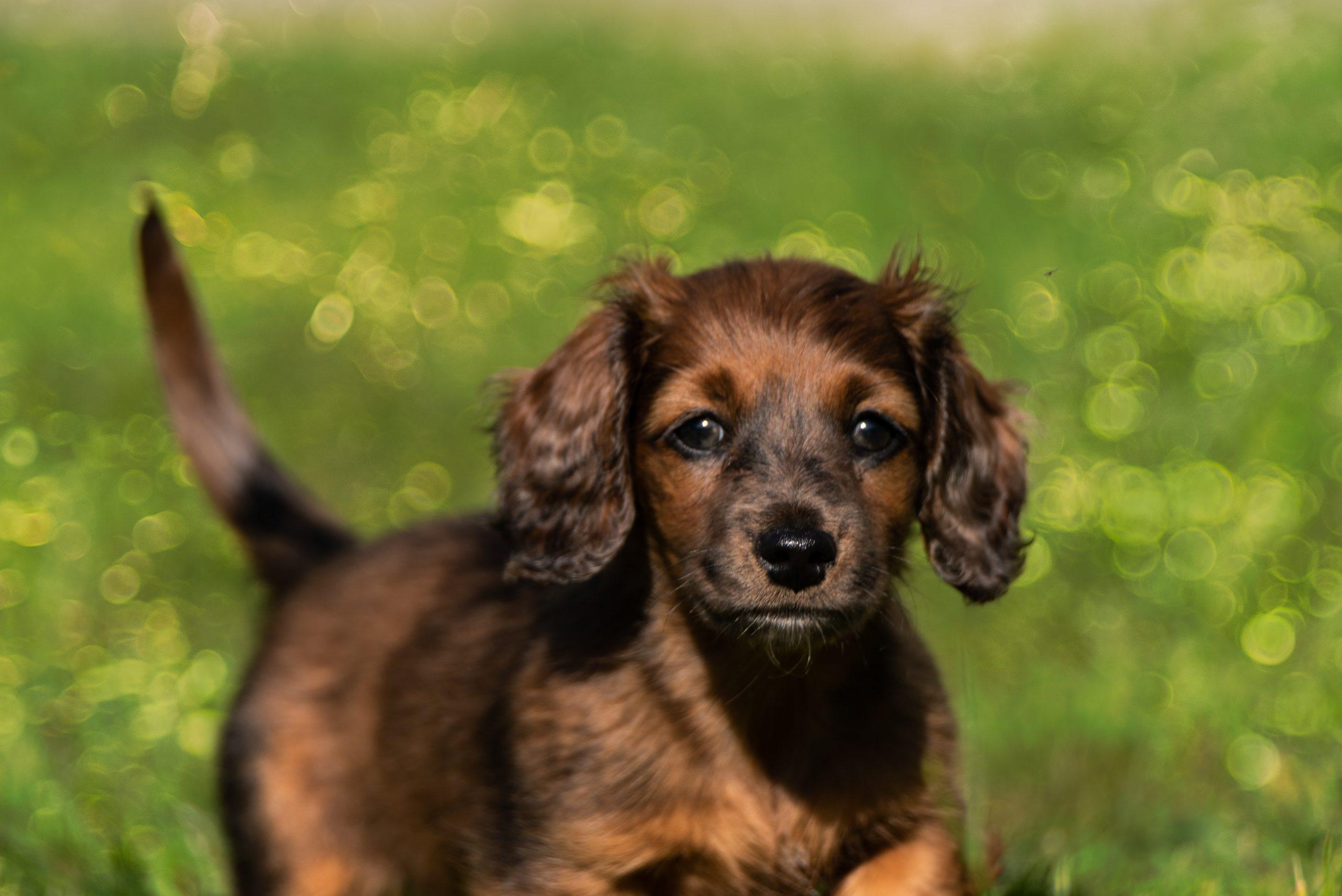 cachorro marrón en cesped