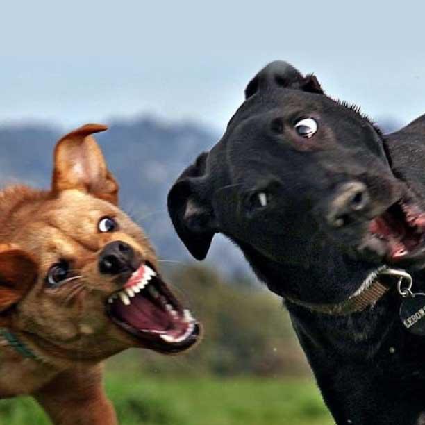 Curso técnico en modificación de conducta de perros
