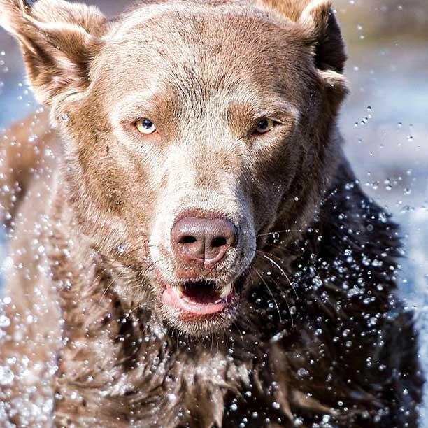 Curso perros de rescate y protección civil