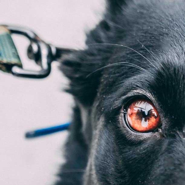 Curso de perros detectores de sustancias