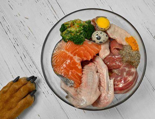 Dieta BARF para perros y cachorros