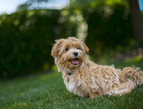 Comida humeda para perros ¿Mejor o peor que el pienso?