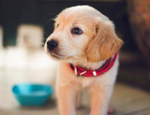 Vacuna polivalente para perros ¿Qué es?