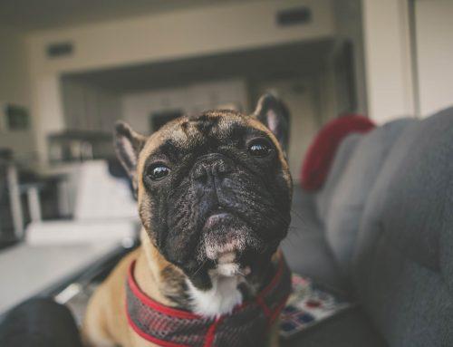 Mi perro me muerde ¿Qué puedo hacer?