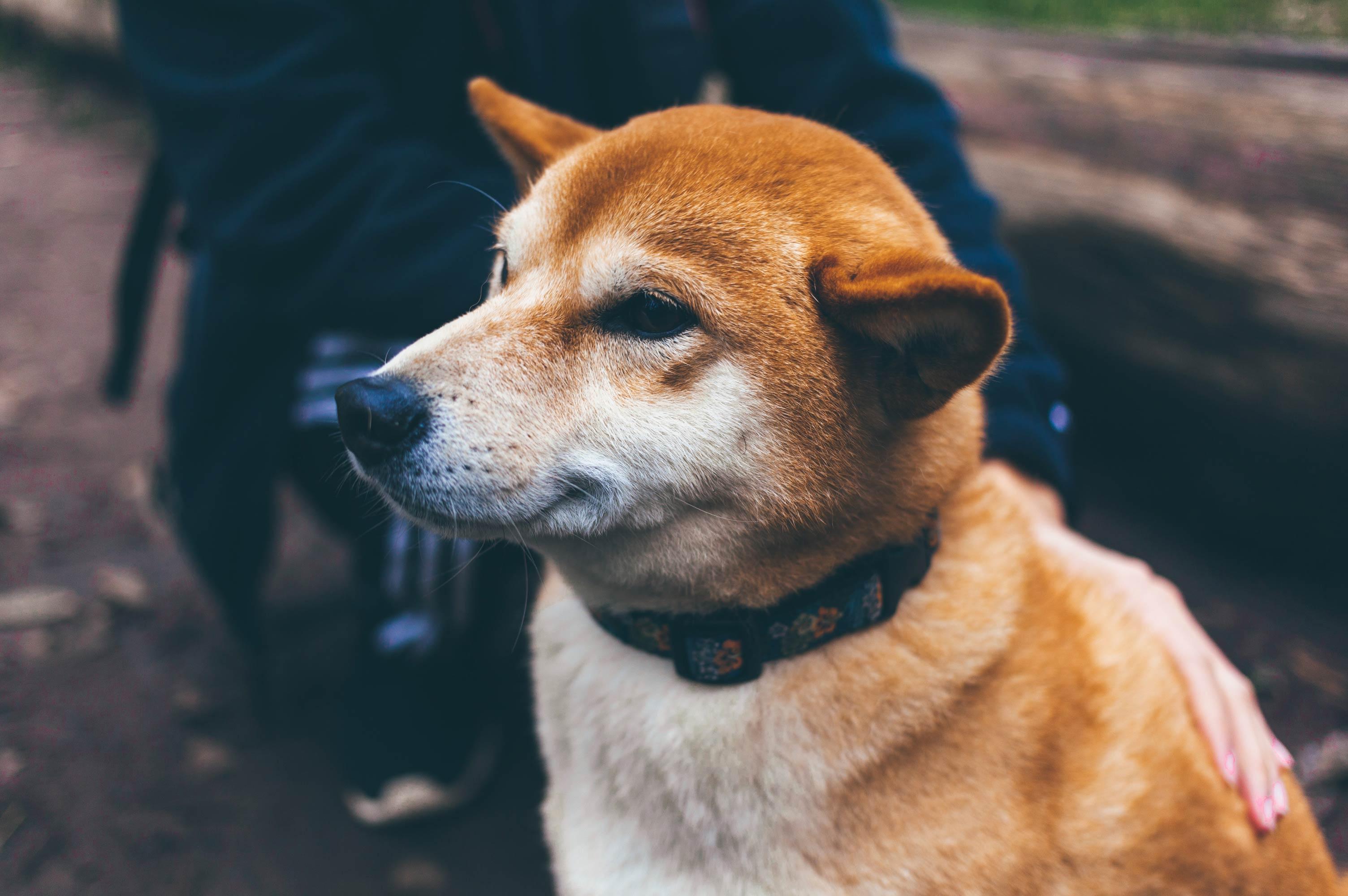 estornudos por alergia en perros