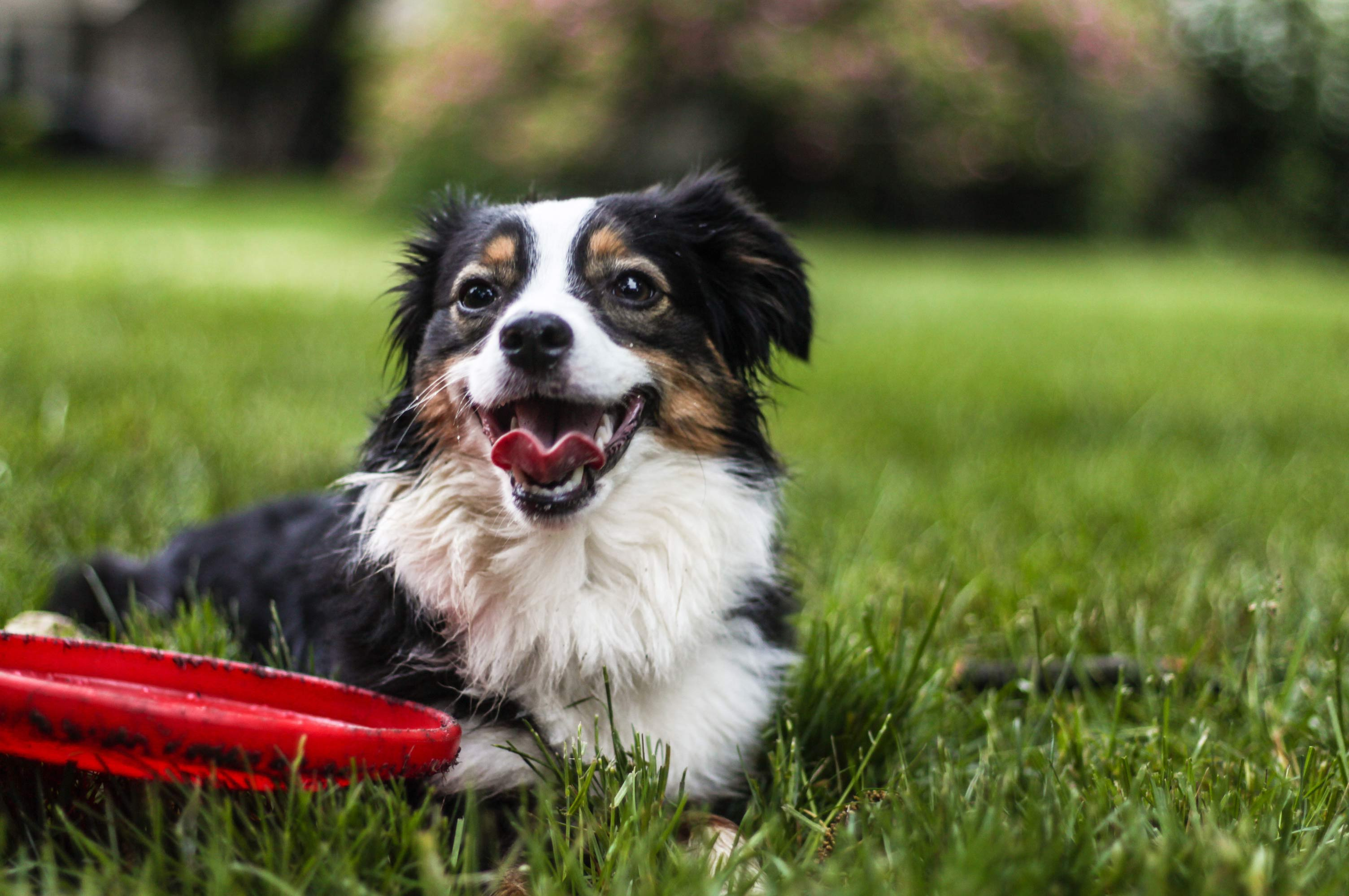 picadura de garrapata en perros sintomas de diabetes