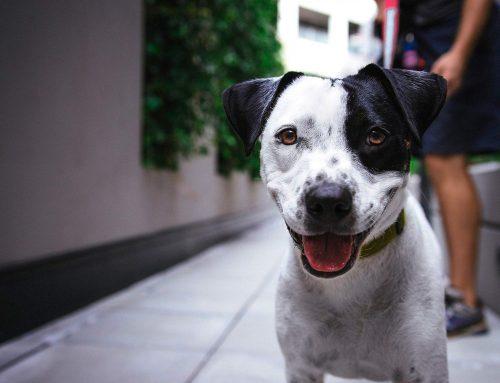 ¿Cómo enseñar a un perro  a hacer sus necesidades en la calle?