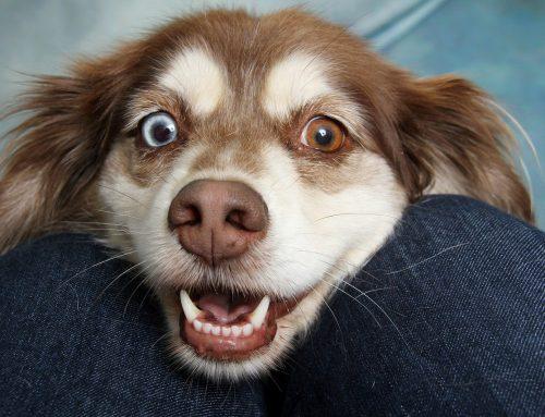 Cómo saber si mi perro es feliz