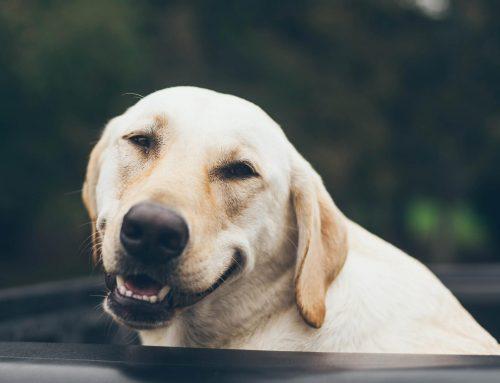 ¿Cuanto cuesta mantener un perro?