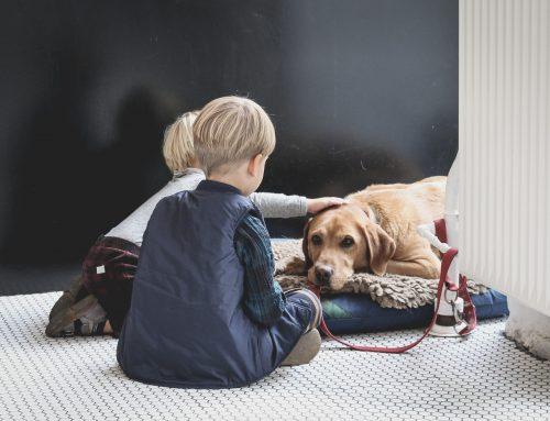 ¿Cuáles son los mejores perros para los niños?