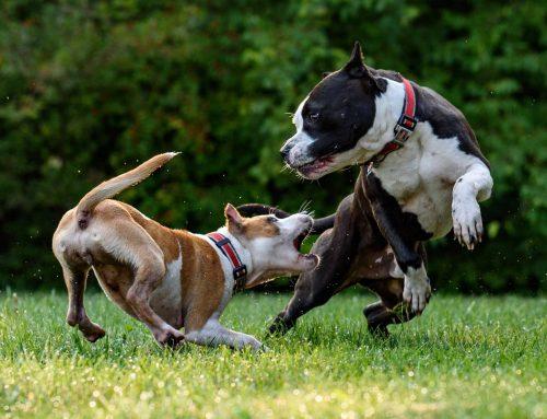 Interpretando el lenguaje corporal de los perros