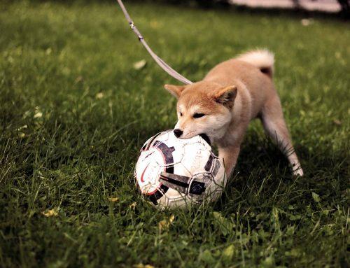 ¿Cómo evitar que tu perro lo muerda todo?