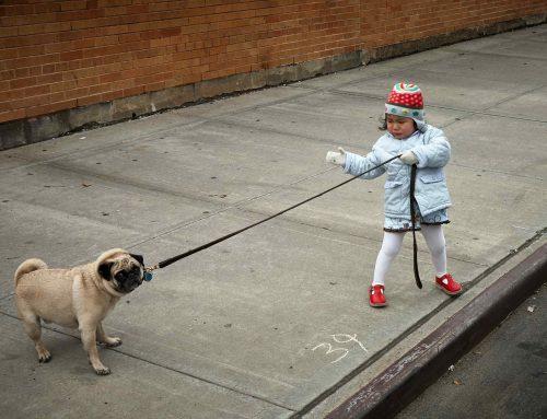 Mi perro tira de la correa al pasear: ¿qué puedo hacer?