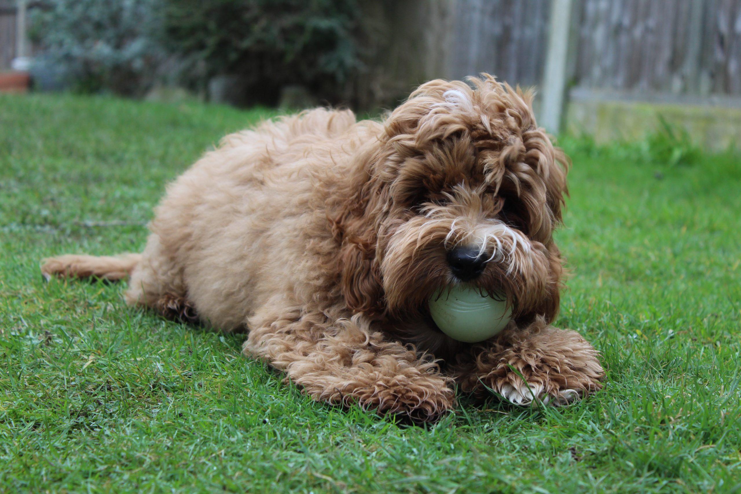 mitos sobre adopcion perros