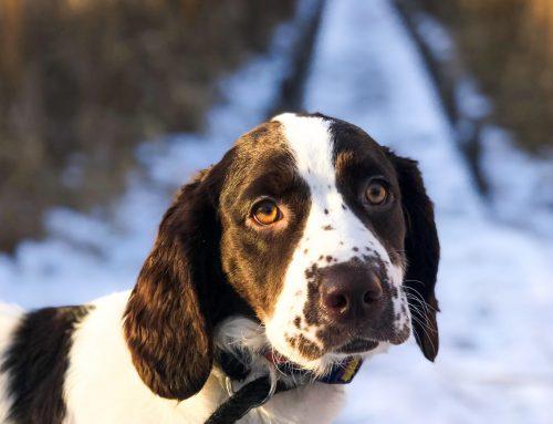 Los 6 mitos sobre la adopción de perros