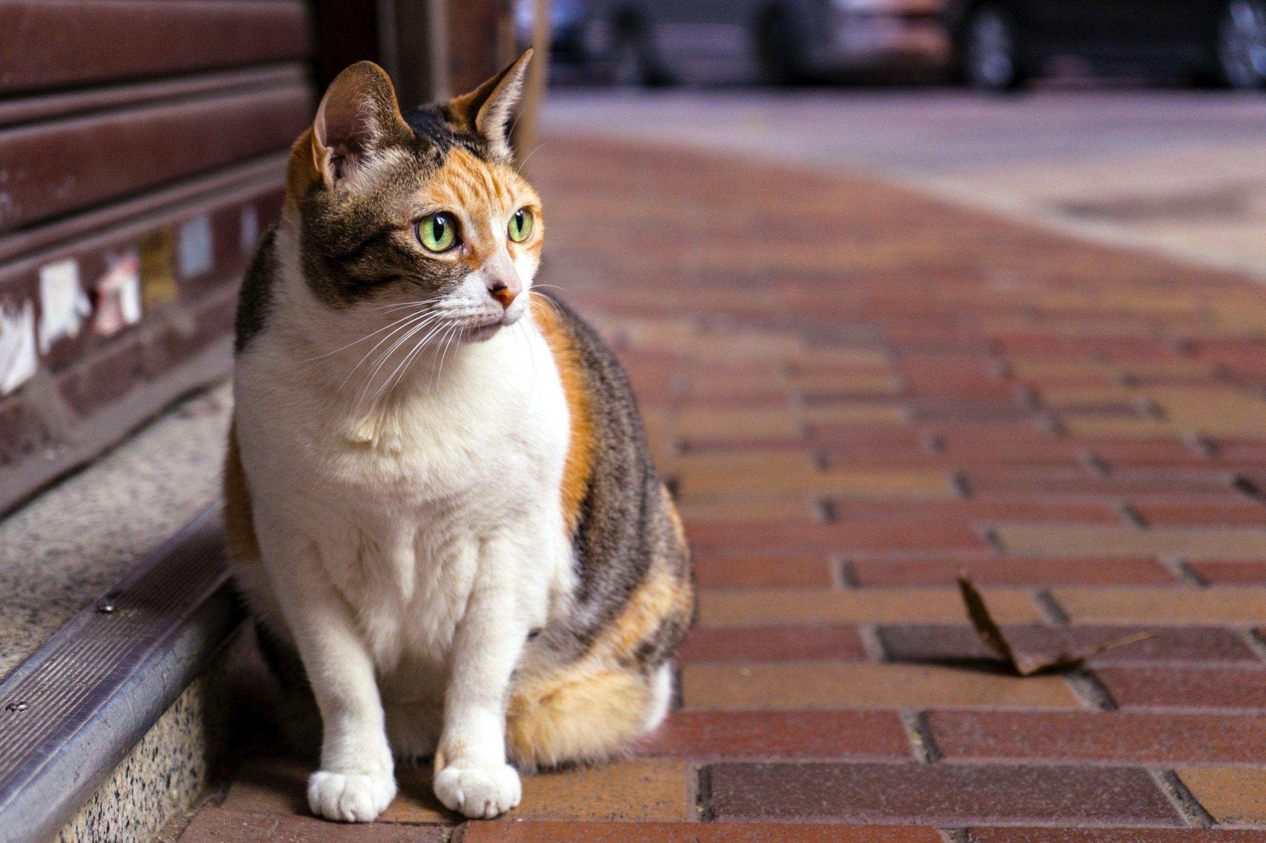 gato en la calle