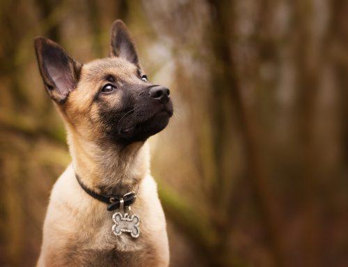 Collar o arnes para perro ¿Cómo elegir?