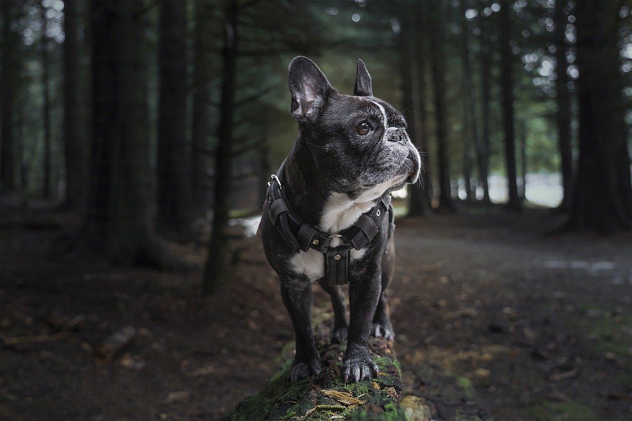 arnes-perro