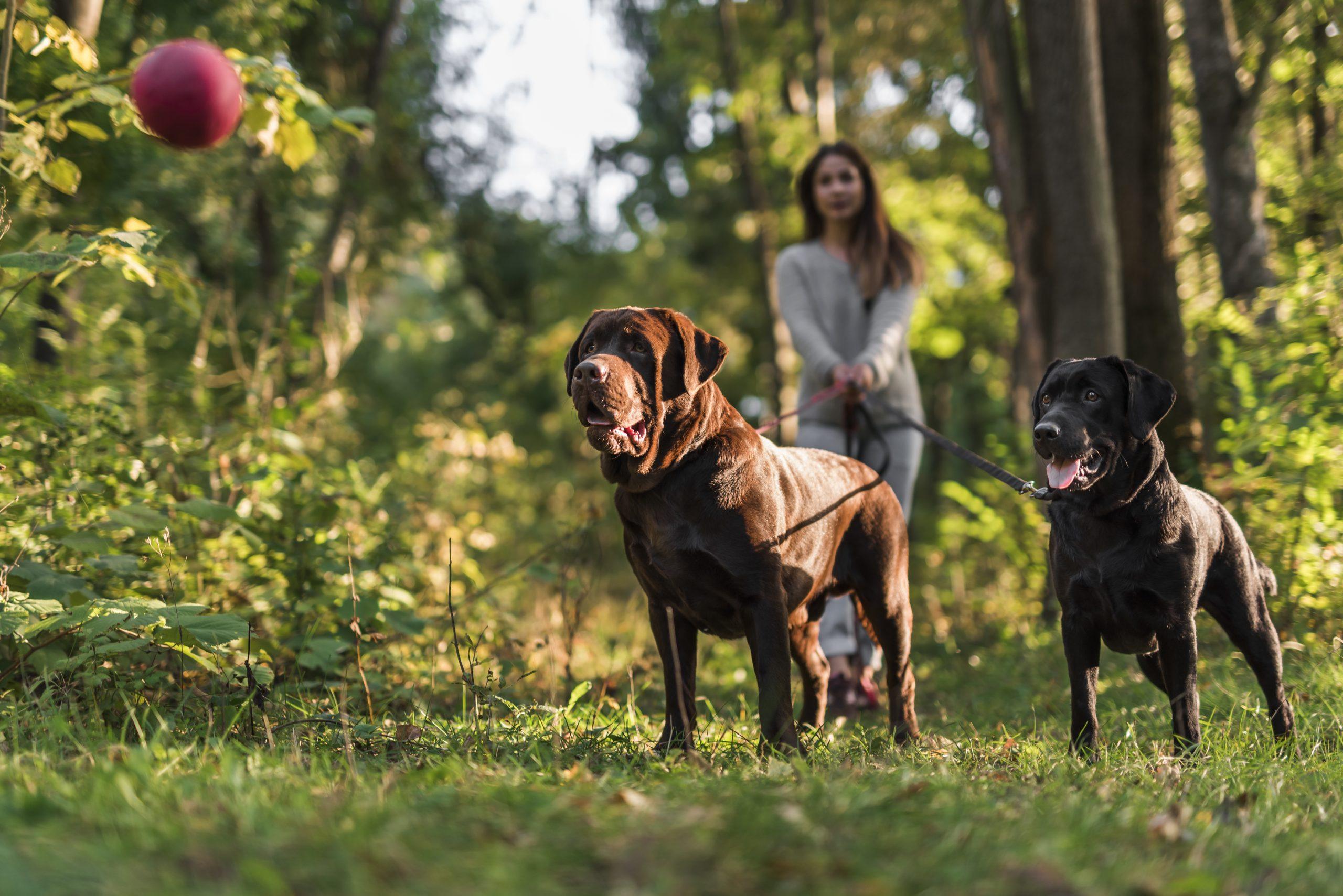 Perros paseando con collar