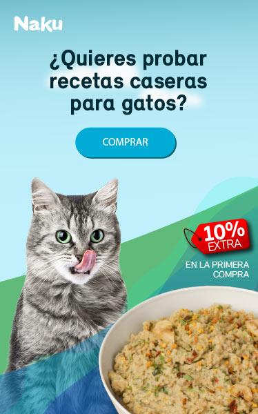 Comida casera para gato