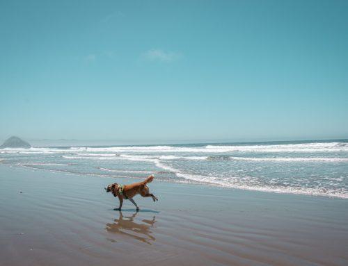 Cuál es la normativa de las playas para perros en España