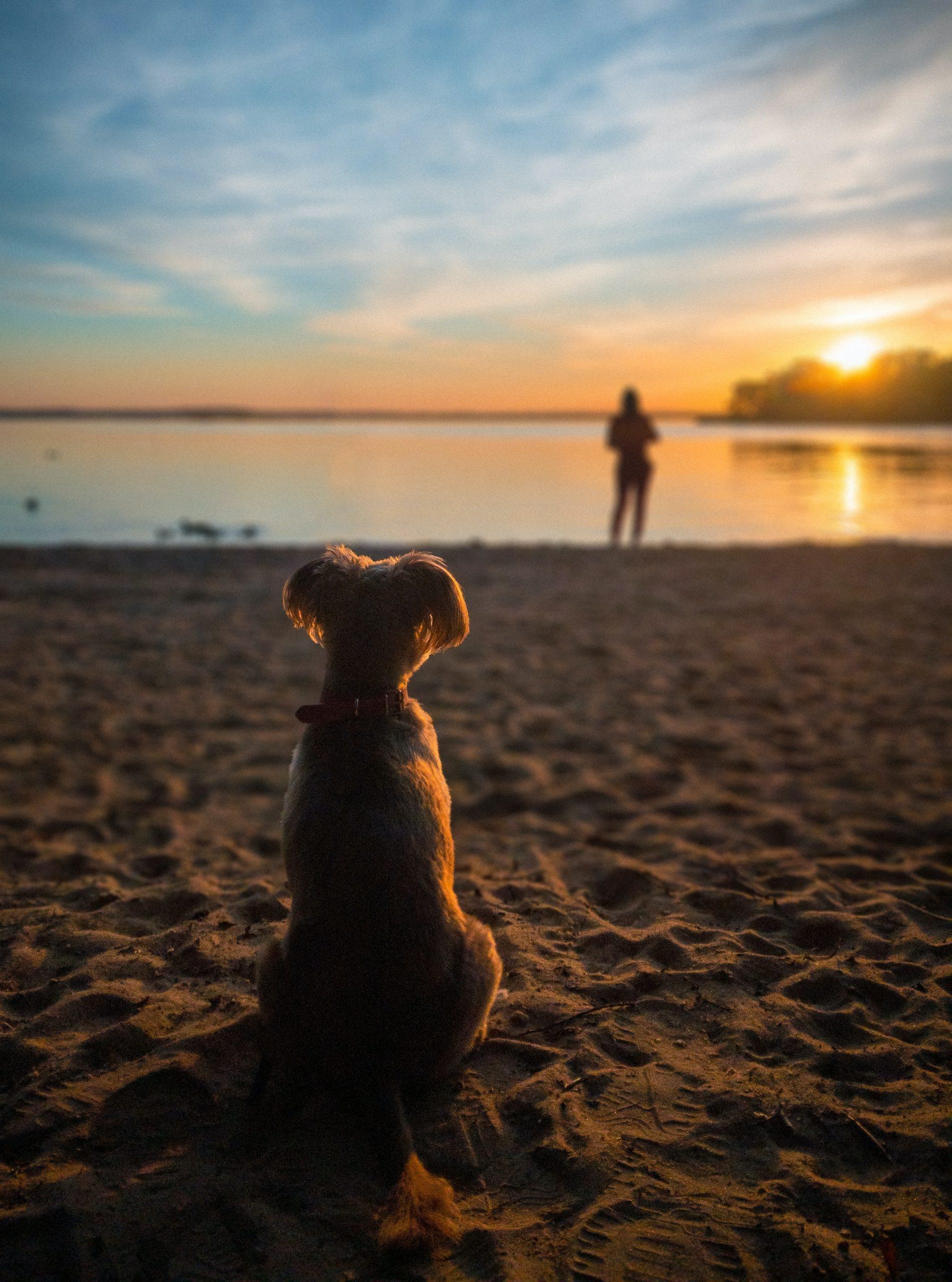 perro playa atardecer